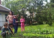 Bio-kertészet: Az óvoda konyhakertjében az óvónő irányításával kertészkedő ovisok